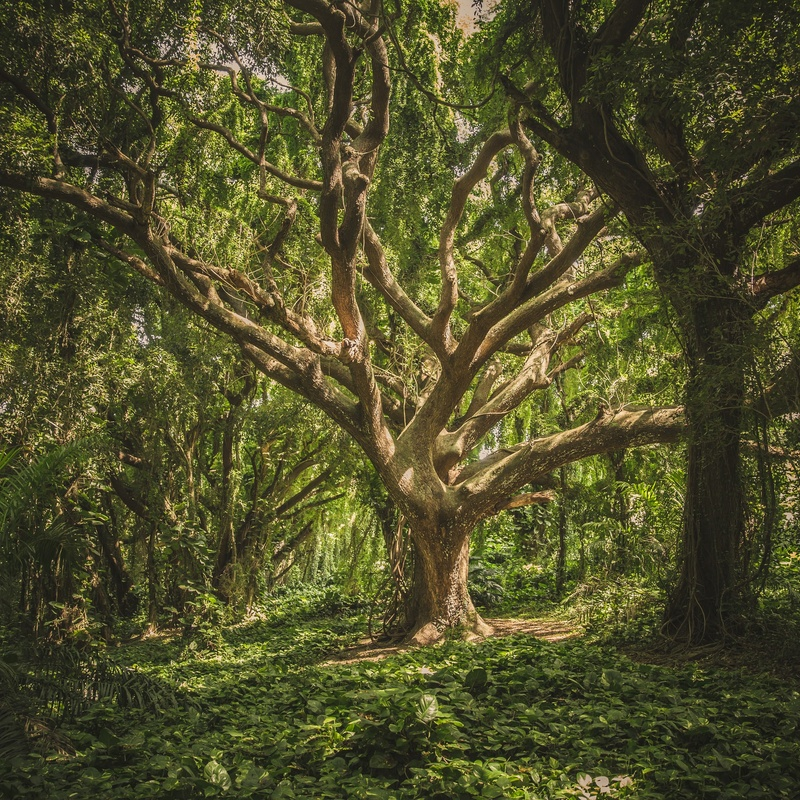 How to Develop an Opportunity Solution Tree